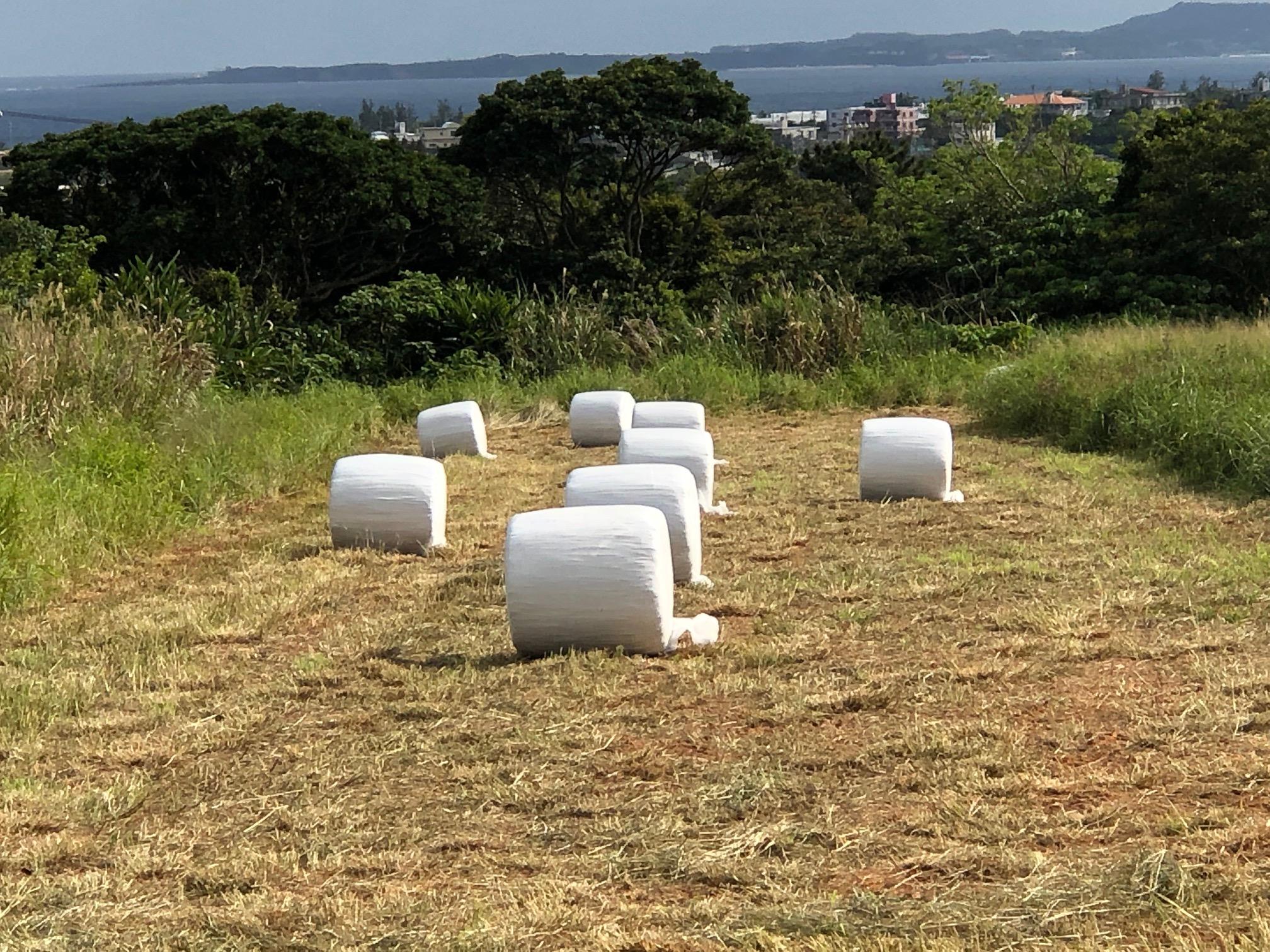 牧草の梱包始まりました。