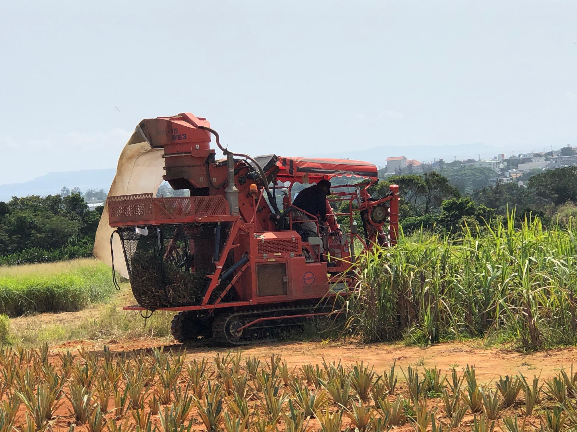 サトウキビの収穫です。